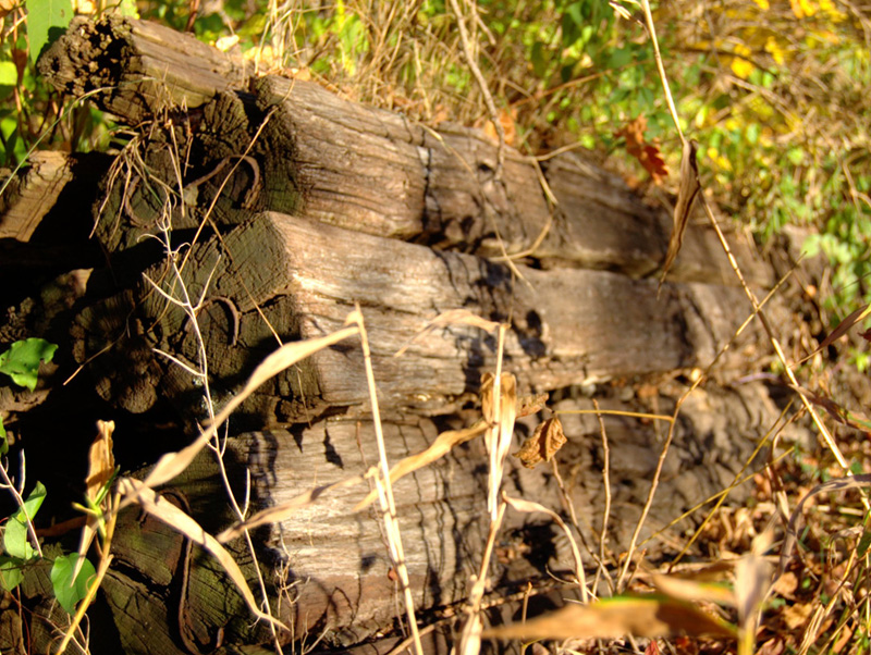 Railroad Ties are NOT Legal for Home Landscape Use